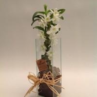 Orquídea  Sonho