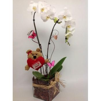Orquídea Linda