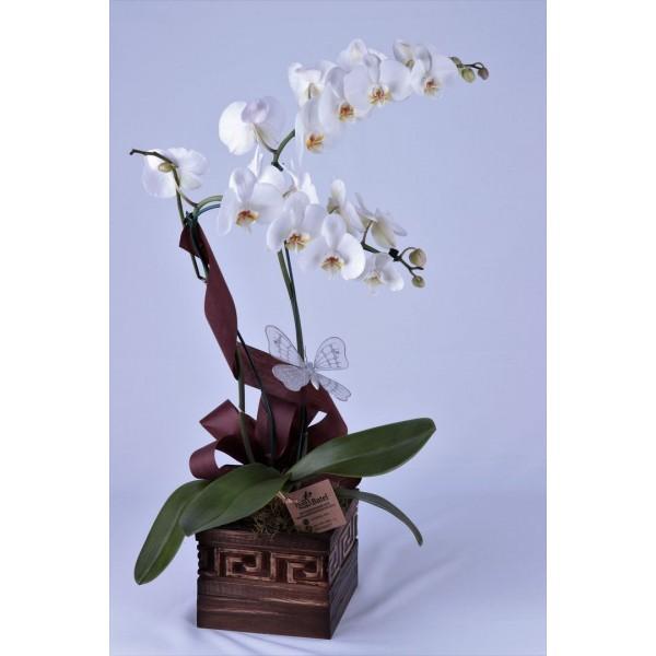 Orquídea Exuberante