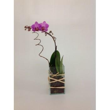 Mini Orquídea Elegante