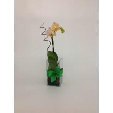 Mini Orquídea Alegria